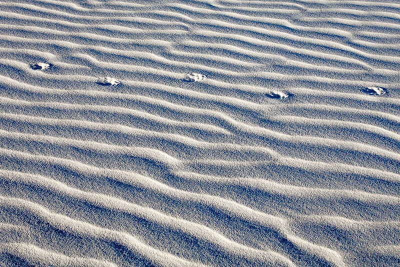 Sand Ripples and Animal Prints, White Sands National Monument, NM