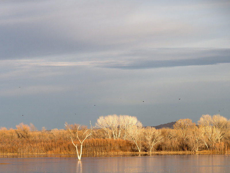 Late Afternoon Light, Bosque del Apache National Wildlife Refuge, NM