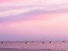 Moored Sailboats at Sunset, Santa Barbara CA