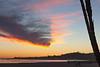 Palm Trunks and V Shaped Cloud, Santa Barbara CA