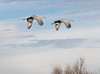 Two Sandhill Cranes, Bosque del Apache National Wildlife Refuge, NM