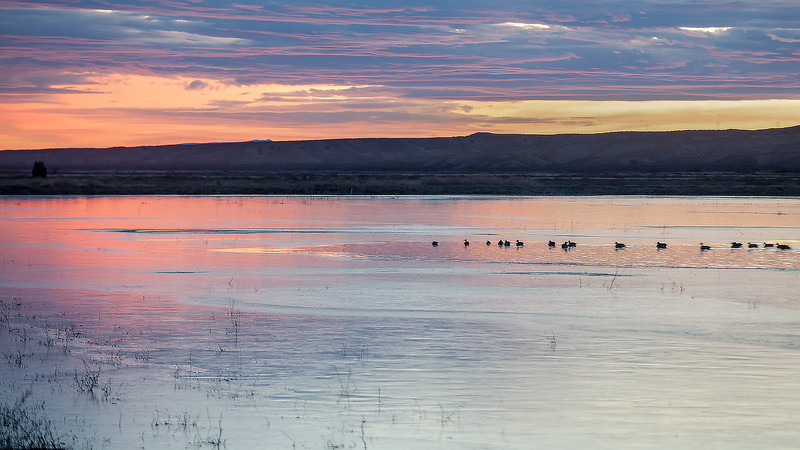 Waterfowl Resting on Pond at Sunset