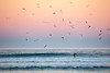 Stand up Paddler and Birds at Dawn, Morro Bay CA