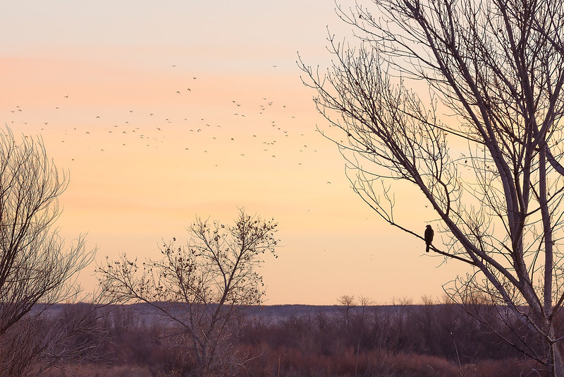 Watching Like a Hawk, Bosque del Apache National Wildlife Refuge, NM