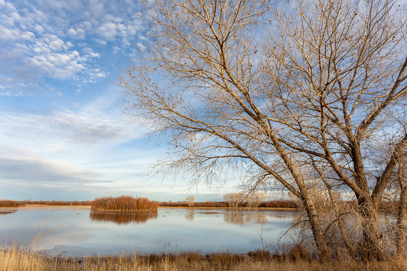 Late Afternoon Scene, Bosque del Apache National Wildlife Refuge, NM