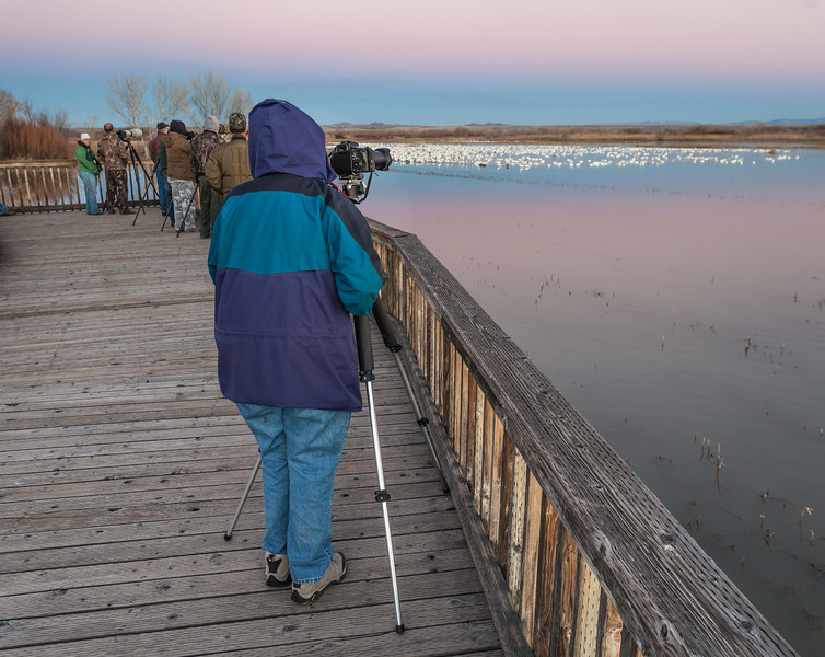 Bird Photographers I, Bosque del Apache National Wildlife Refuge, NM