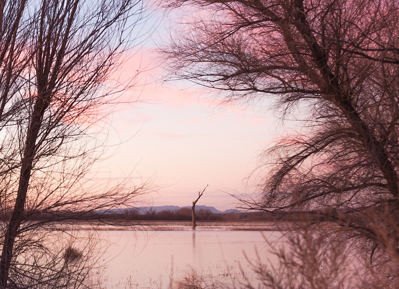 Pre-Sunrise Scene, Bosque del Apache National Wildlife Refuge, NM