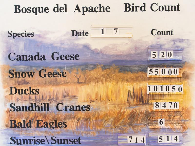 Bird Count Jan 7 2014, Bosque del Apache National Wildlife Refuge, NM
