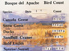 Bird Count Jan 7 2014, Bosque del Apache National Wildlife Refuge, NM