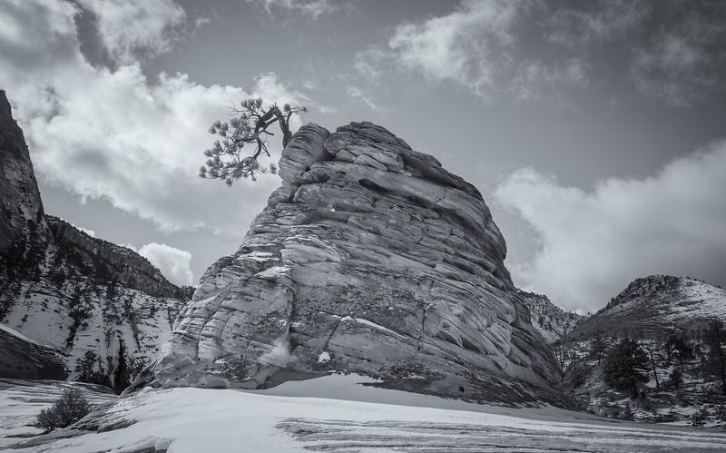 Bonsai Rock..