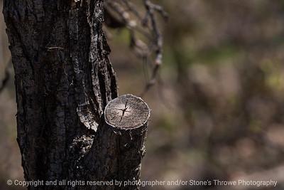 015-tree_trunk_scar-wdsm-15apr19-12x08-008-400-9886
