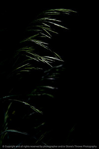 015-grass-wdsm-29may17-12x18-004-9338