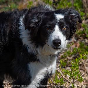 015-dog-wdsm-19apr20-09x09-006-400-6509