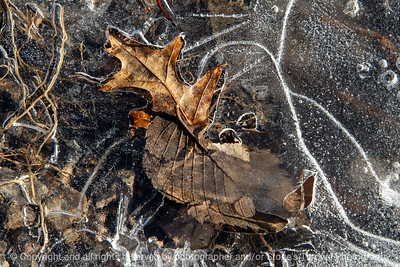 015-leaves-wdsm-23dec18-12x08-008-350-9143