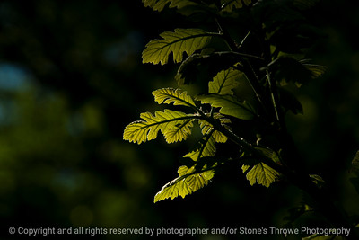 015-leaves-wdsm-09may17-18x12-003-2859