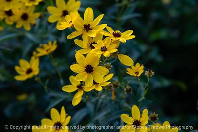015-wildflowers-wdsm-05sep19-12x08-008-500-3267