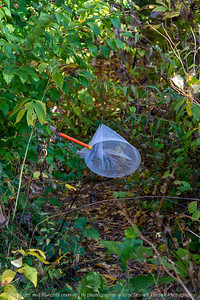 015-litter_plastic-wdsm-11oct20-08x12-008-400-8586