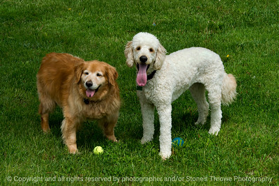 015-dogs_dolly_lucy-wdsm-18may17-18x12-003-9180