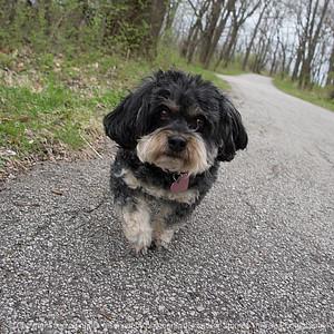 015-dog_maddie-wdsm-12apr17-12x12-206-8319