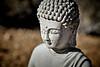 Budda Statue Head