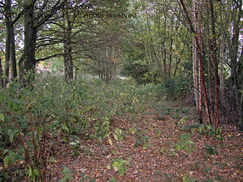 This is the route of the Ashurst Spur between Groombridge Junction and Ashurst Junction, but frankly if you did not know that a railway had been here it would be hard to tell.  Some former lines quickly become overgrown but for some unexplained reason the trees have not grown on the trackbed here.  19.10.2003