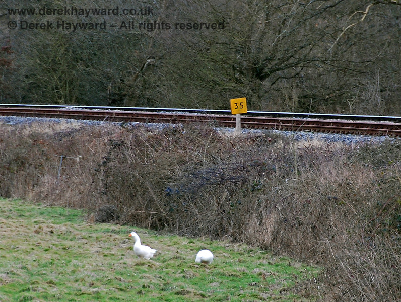 The lineside clearance also revealed the 35 mile post. The geese belong to the adjacent farm. 02.03.2009
