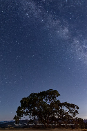Milky Way Rises over an Oak Tree at Henry Coe State Park, California