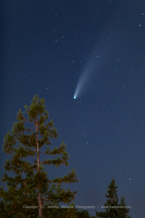 Conifer, Stars and Comet Neowise