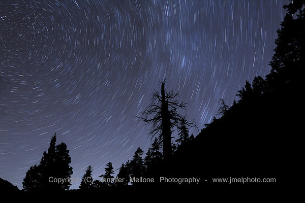 North Star and Star Trails Trees Silhouette at Desolation Wilderness