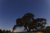 Starry Night Oak Tree at Henry Coe State Park, California