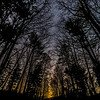 A View of Night Sky Through The Trees 4/4/19