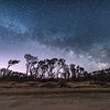 The Milky Way Rising Over The Tree Line on Cape May Beach 3/17/18