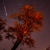 A Taurid Meteor Streaking Across the Sky, Farmingdale, NJ