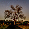 Constellation Orion Over Cemetery Tree, Farmingdale, NJ