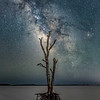 The Milky Way Rising Over A Lone Dead Tree In The Bay At Assateague Island, MD 5/13/21