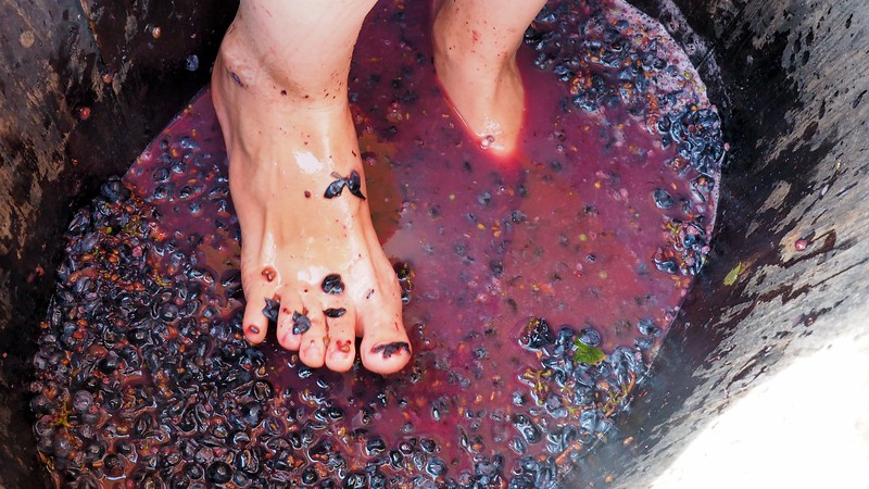 Close up shot of Audrey Bergner's (aka That Backpacker) feet stomping on grapes at La Vinyeta Cellar