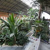 Botanical garden inside Madrid's Atocha train station.