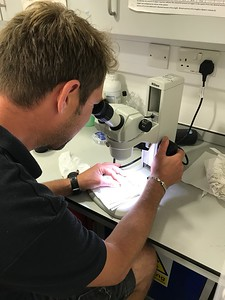 In the Lab - Determining if coral will spawn