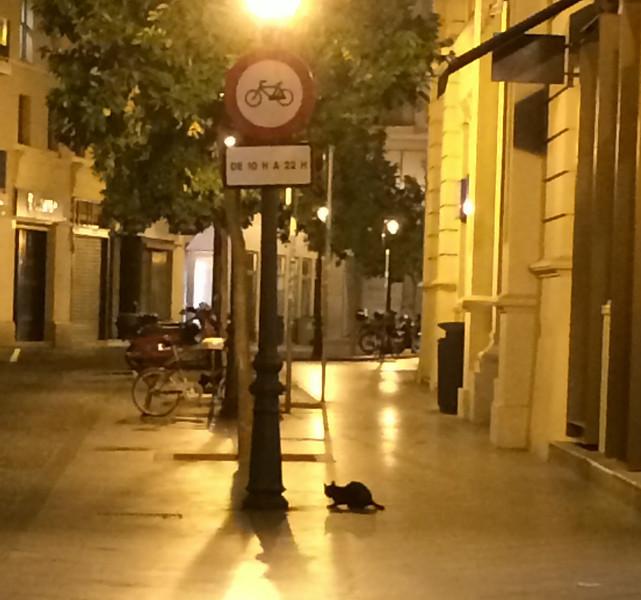El Gato Negro!