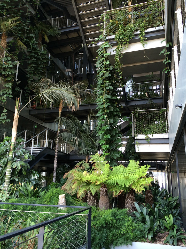 The next morning...took the open air stairs down from our room 21st floor to 16th floor. Central stairway of the hotel was nice with botanical plants...