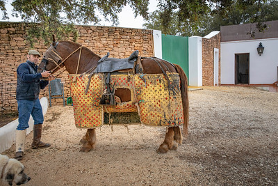 We did not wish to see any actual bull fighting, but we did see the preparations.  Here the horse is protected from the bull with a heavy canvas coating