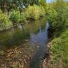 River Arlanzón in Spring