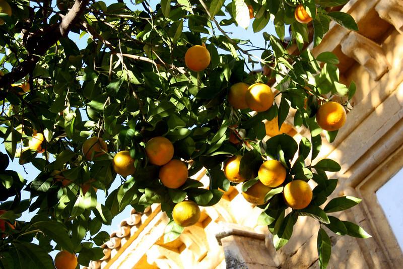 Oranges in Cordoba, Spain