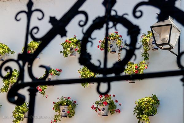 Wall flowers I, Córdoba