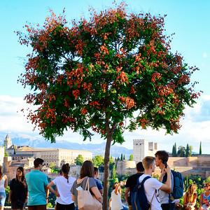 Granada - Mirador de San Nicolas