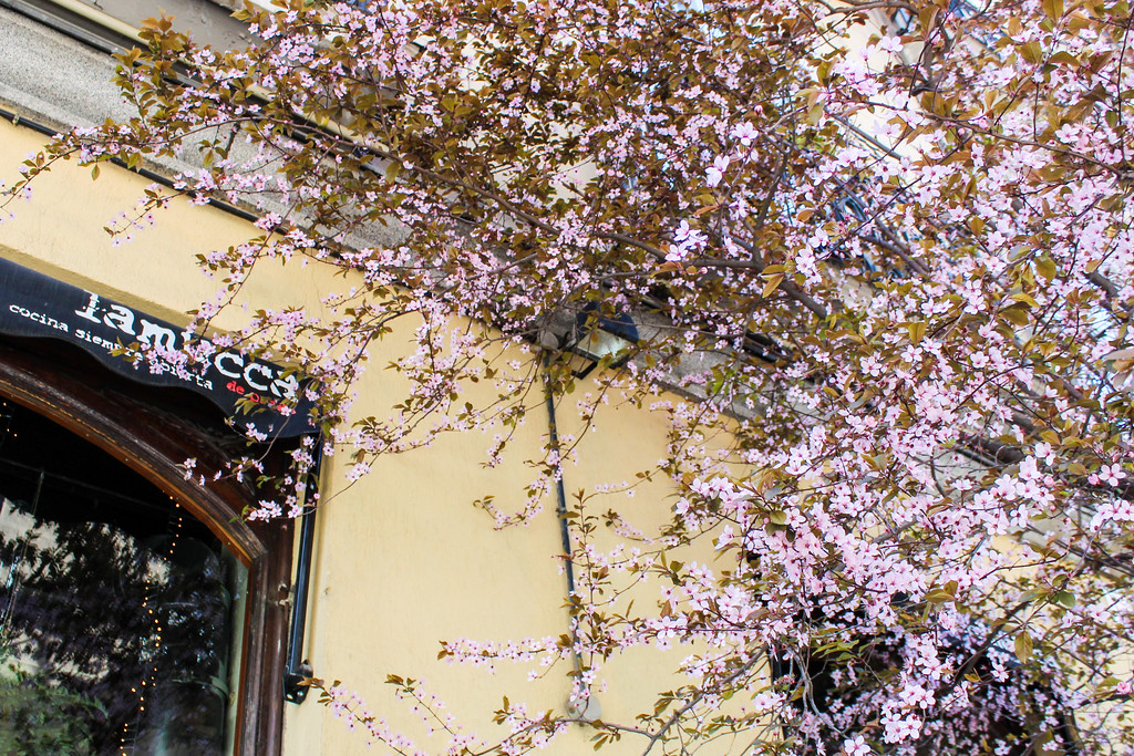 solo travel madrid tip: spring in madrid promises great weather