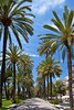 A park with palm lined streets in Palma de Mallorca, Spain.