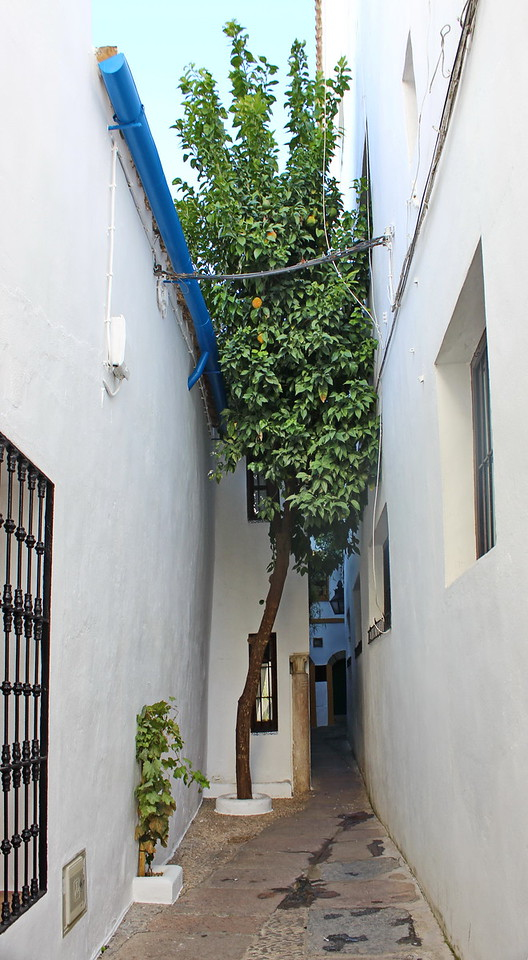 Narrowest Street in the Old Jewish Quarter