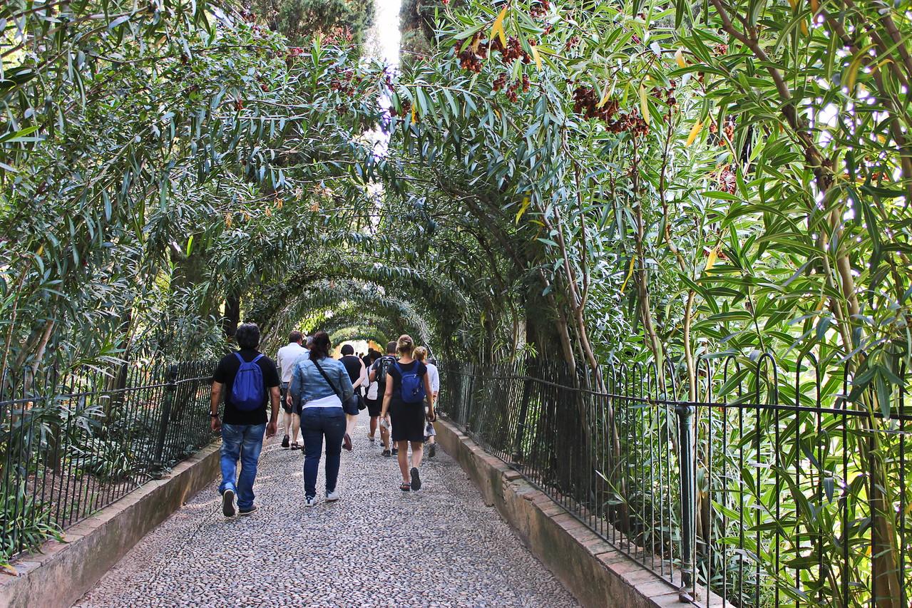 Tree Canopy Path