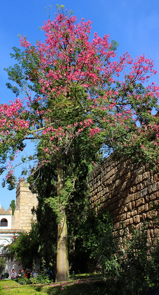 Entrance Courtyard with Silk Tree